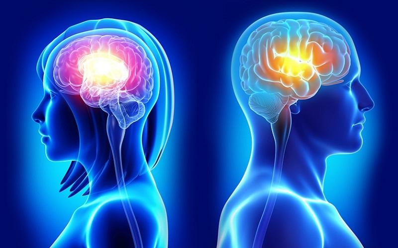 در سال ۲۰۱۵، دکتر «دافنه جول» در مجله PNAS ، نتایج پژوهشی را منتشر کرد که باعث تعجب بسیاری از پژوهشگران گردید. او در این پژوهش، ام آر آی مغز ۱۴۰۰ نفر را از چهار منطقه مختلف دنیا بررسی کرده، و حجم ِ ۱۰ منطقه قشر مغز را که در مطالعه «لاری کاهیل» بین زن و مرد اختلاف داشتند، اندازه گیری نمود.